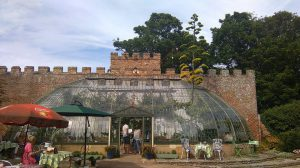 American Agave in flower at the Italianate Greenhouse in King George VI park Ramsgate