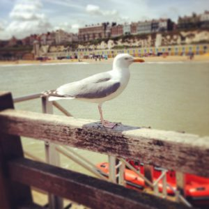A seagull looks over Broadstairs from the jetty