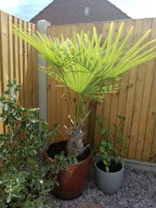 palms in garden