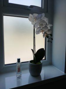 orchid on cloakroom window ledge