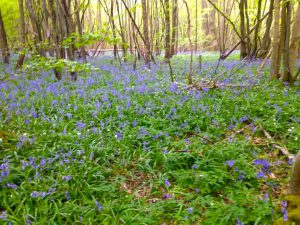 Coppetts Wood shared by Beeches Holiday lets great outdoors blog post